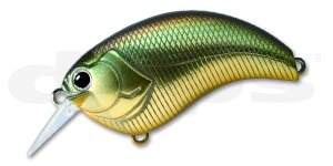 Deps Evoke-Golden Shiner