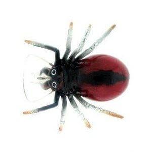 River 2 Sea Spider Crank Color 10