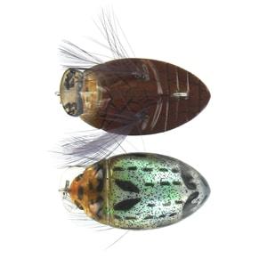 Micro Crankbaits River 2 Sea Gt Bug Color gtb 03